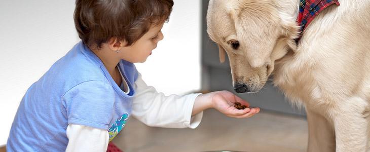 Jejum: quando fazer com meu cachorro?