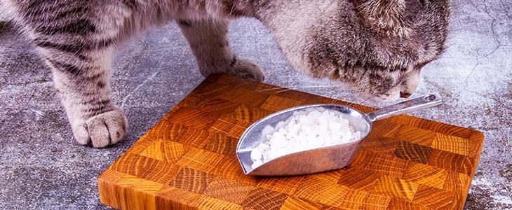 Sal causa pressão alta em gatos?